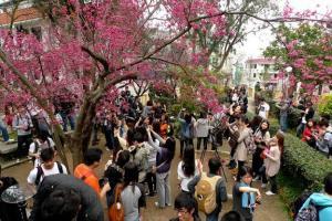 嘩!你看這裏的人潮,大家今年要錫住櫻花啊。(新之棧圖片)
