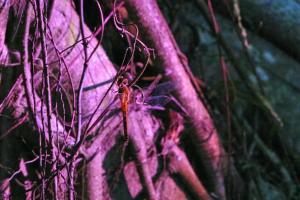 夜行路綫會探索晚間出沒的昆蟲