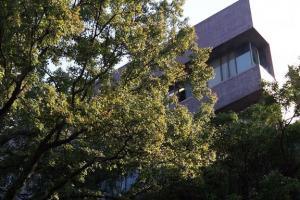 楓香樹高大茂盛,幾乎把旁邊大樓遮住了。