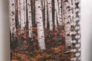 印上櫸木圖案的圍巾($850) 以櫸木製成的天然纖維物料 modal 製作,吸濕透氣並可以自然分解,讓人實踐愛自己也愛周遭的想法。
