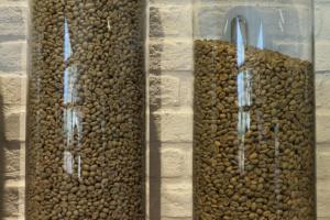 左邊的咖啡豆是用水洗、右邊是用日曬。