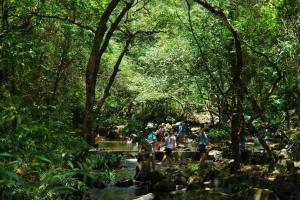 大埔滘的溪澗水質極佳。