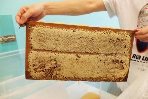店主特意拿出一板完整的蜂巢,有少少密集恐懼症的小記怕怕啊!