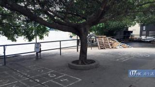 賽馬會鯉魚門創意館外有得跳飛機