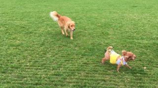 彭福公園是人亦是狗狗的遊樂場