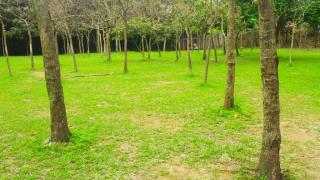 隱世草地,野餐好去處