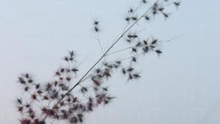 沿途不時看見美麗的花葉,停留一下,慢慢感受自然氣息。