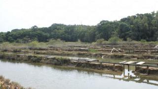 鹽田的上的木通道已腐蝕得七七八八,影相時千萬小心。(關璇攝)