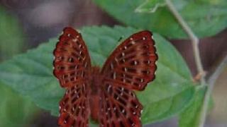甲龍古道生態園蝶影處處。