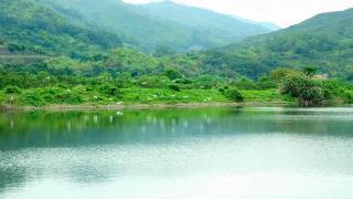 茶座附近有數個魚塘,風景優美。