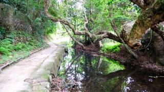 谷埔有一小溪貫穿各「肚」,循溪走即可到達最深處。