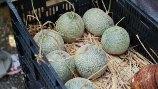 綱紋瓜味味道清甜,即場吃味道更是一流。
