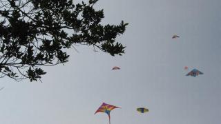 遇上好天氣的話,抬頭看盡是風箏艦隊。