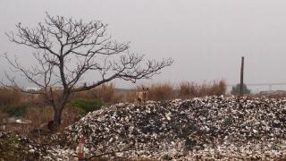流浮山碼頭沿海一帶,不時看見這類蠔山。