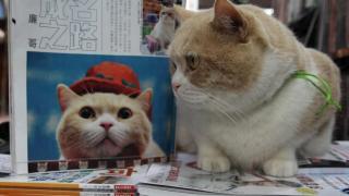 忌廉哥:呢隻貓咁靚仔,邊個嚟呢?