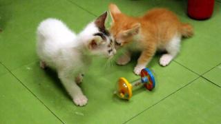 驚喜發現貓 BB,卡嘩兒呢!