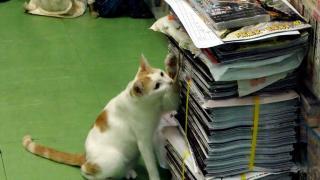 貓咪好奇心強,新書來到要查探一番。