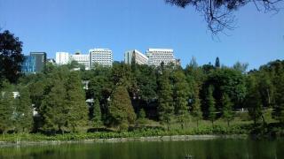 中大未圓湖畔種滿落葉喬木,有楓香、落葉松及池松。