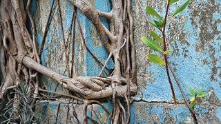 這是 Romain 其一鍾愛的照片,除了植物的根部,還有小花生長,而粉藍色油漆與兩者的顏色亦很配襯。