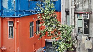 第一張為系列拍的作品,無意中在鮮艷的牆身當中找到一棵小樹,啟發了他拍攝 wild concrete 整套作品集。