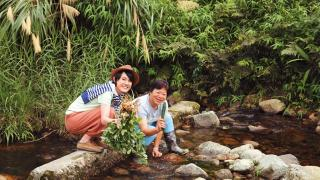 有機農場旁有山水溪流,可蹲在石壆清洗新鮮有機菜。