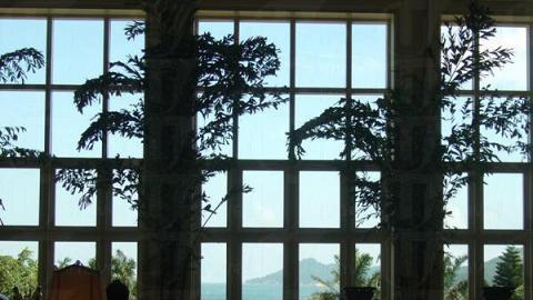 樹影,玻璃影與光影交織成美麗圖畫。