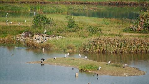 每年的 10 月至 3 月,許多季候鳥視米埔及濕地公園的保護區範圍為南方的家園。 ( 孫靜雯攝 )