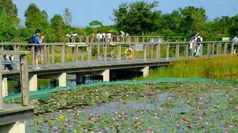 蓮花池池花盛放。( 孫靜雯攝 )
