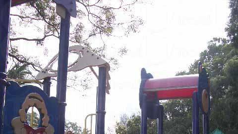 九龍公園的兒童遊樂場顏色鮮明,而且保養維修工夫不錯。