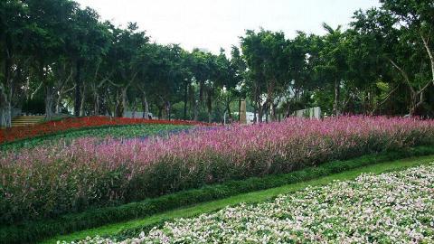 一排排的花卉種得井井有條,恍如香港「小富良野」。