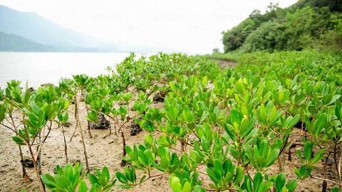 跟著海岸線走,沿途都是大片紅樹林,很有自然氣息。