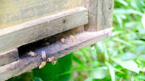 等待上菜時,不妨參觀一下農莊的蜂箱,聽聽老闆大談養蜂之道和往事。
