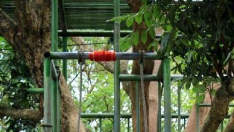 樹屋滑梯不算刺激,勝在可讓人從樹上滑下。