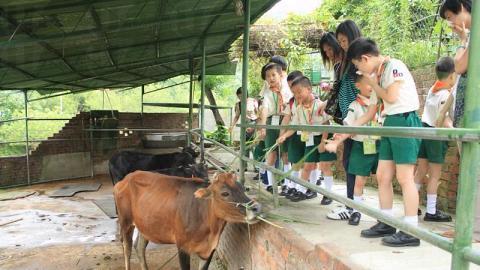 農莊內飼養著黃牛、白兔得小動物,參觀者可購買飼料餵牠們。