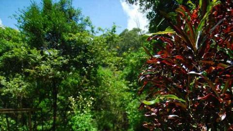 園內有各樣植物生長。