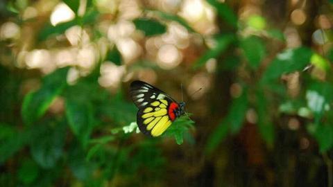 園內有許多蝴蝶,拿著相機靜靜走近,不難捕捉。