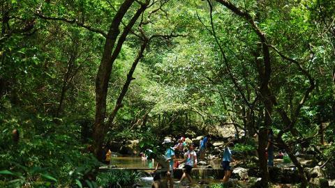 大埔滘的溪澗水質達極佳級別,不少學生到來作水質實驗。