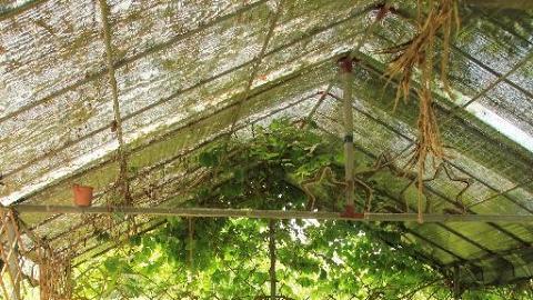 露天茶棚簡約環保,讓你靜靜坐下耹聽大自然的聲音。