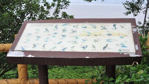 一到冬季,這一帶最常見的鳥就是黑臉琵鷺、針尾鴨。