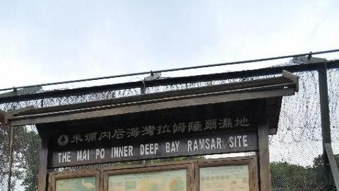 這裡沒有分叉位,經過水警崗後就會看到拉姆薩爾濕地的教育板。