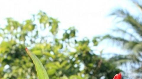 園內有不少花草植物,12 月更是洛神花開花的日子。