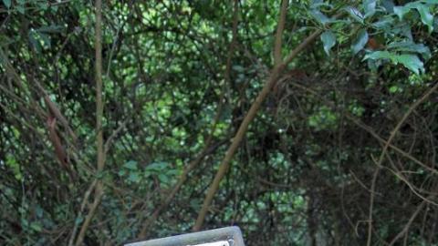古道中樹木繁茂,頗難辨別方向,大家記得認清標距柱以策安全。