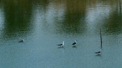 田內魚塘也是一個拍鳥好去處。