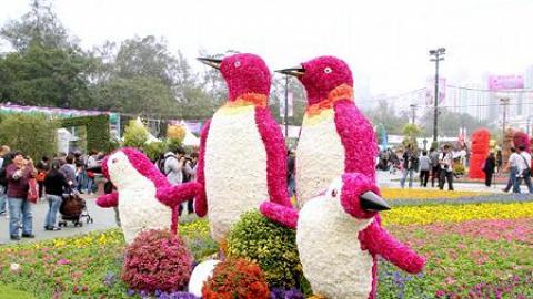 巨型花企鵝(2012 花展圖片)