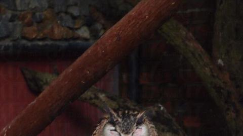 在農場除了賞花,還可看到可愛貓頭鷹。