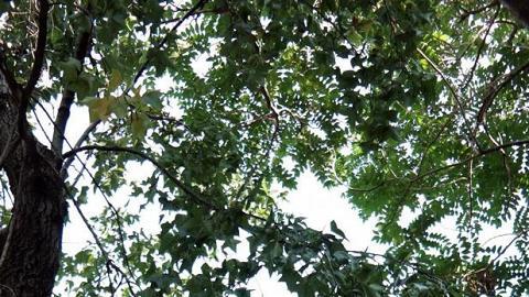 兒童遊樂場附近種有楓香,但為數不多。