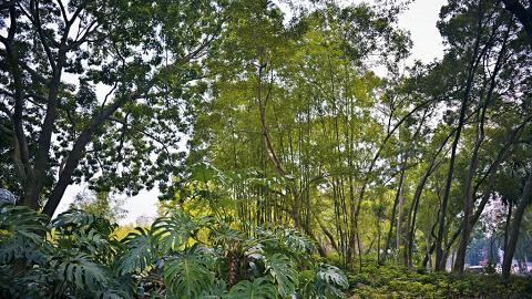 大埔舊墟遊樂場實際上是個樹木集中的綠化地帶。