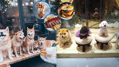 香港10大抵食寵物友善餐廳推薦! 貓狗專屬營地/無敵大海景/狗狗好去處