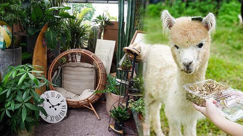 【大埔好去處】大埔假日郊遊好去處!2萬呎綠色植物園/有機農莊親親萌爆羊駝/環保裸買店