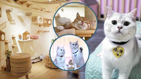 【貓Cafe】香港7間特色貓貓cafe推介 提供領養服務粉紅少女風/和風榻榻米/戶外露台座位